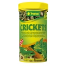 Tropical Crickets - Heimchen